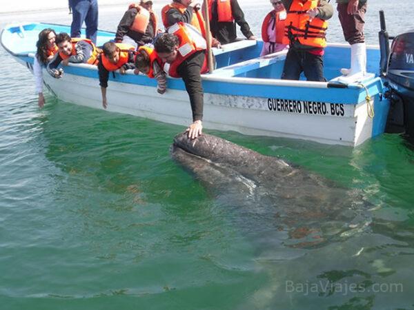 Paseo de Avistamiento de Ballenas en Guerrero Negro, Baja California Sur