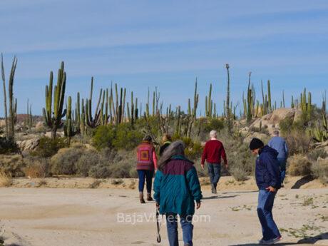 Recorrido en la Reserva del Valle de Los Cirios, Baja California.