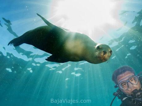 Snorkel con Lobos Marinos en Isla Espíritu Santo, La Paz, Baja California Sur.