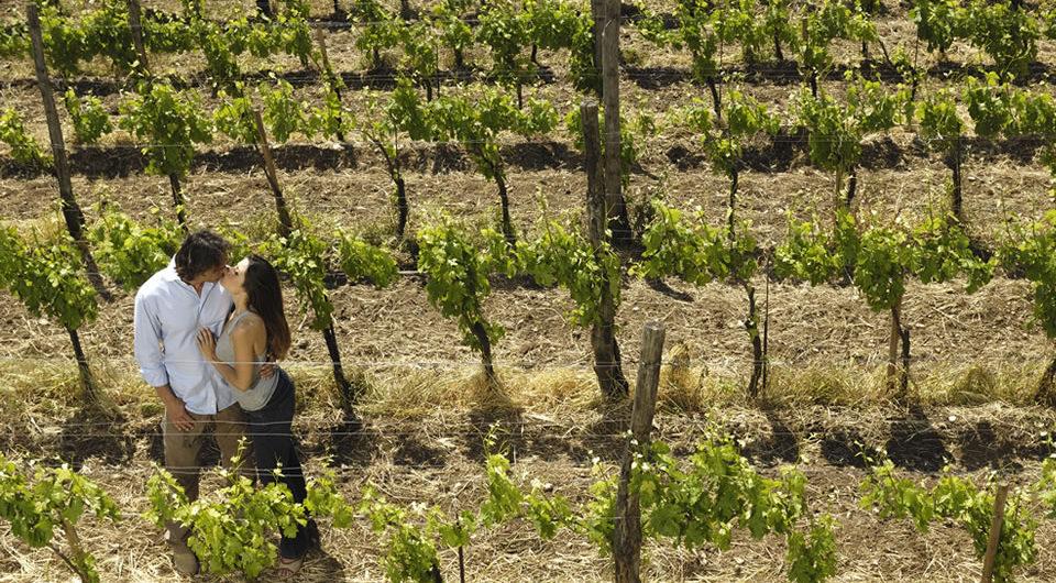 Experiencias entre los viñedos de la Ruta del Vino.