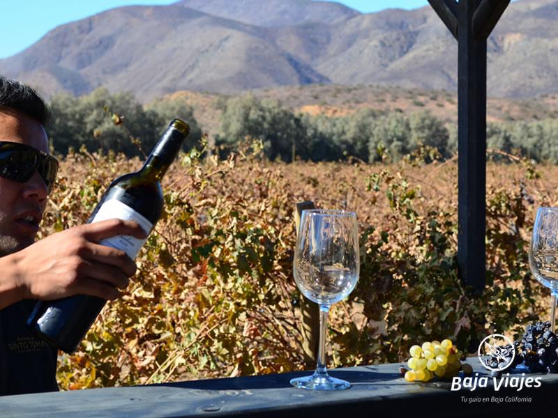 Tour en la Antigua Ruta del Vino, Valle de Santo Tomás.