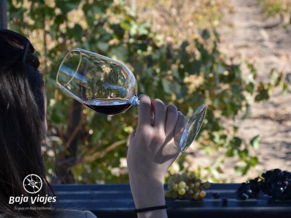 Experiencia enológica en Valle de Santo Tomás, durante el Tour a la Antigua Ruta del Vino.