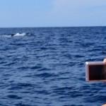 Paseo de avistamiento de ballenas en la Península de Baja California