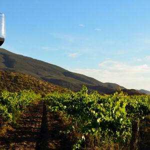 Tours a la Ruta del Vino