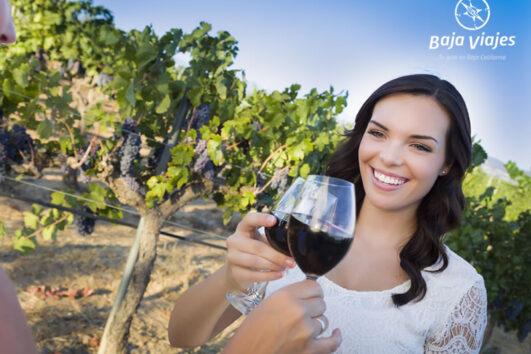 Degustación de vinos entre viñedos en la Ruta del Vino