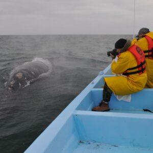 Safari Fotográfico de Avistamiento de Ballenas en Guerrero Negro. Fotografía: Julio Rodriguez.