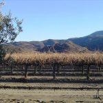 Viñedos de LA Cetto en 2007. Historia del Valle de Guadalupe