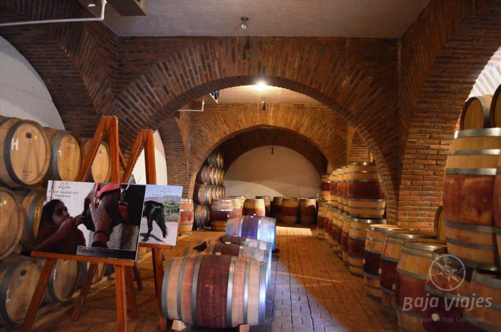 Bodega de barricas en vinicola Adobe Guadalupe Ruta del Vino.