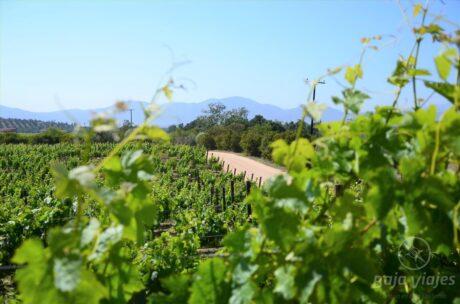 Viñedos en la Ruta del Vino, Valle de Guadalupe